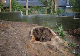鎌倉市台風被害時の樹木倒木、伐採