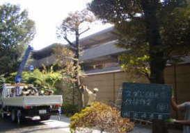 鎌倉市のマンション伐採工事