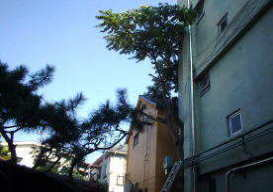 鎌倉市の伐採工事
