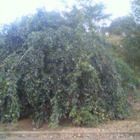 珍しい樹木