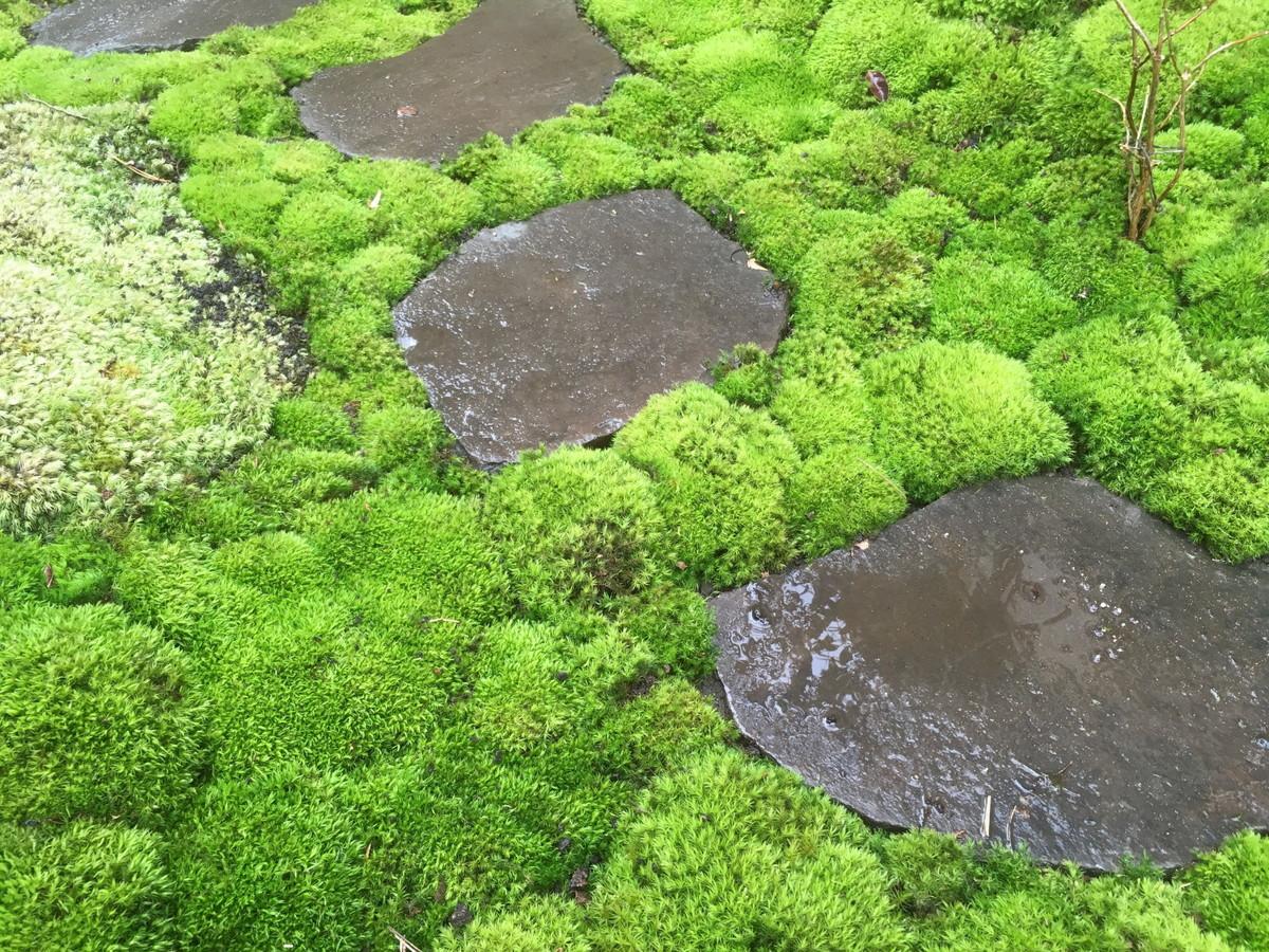 今回使用した苔はカミジ、ゴケ、フデゴケ、スナゴケ、シラガゴケ等を使用しました。