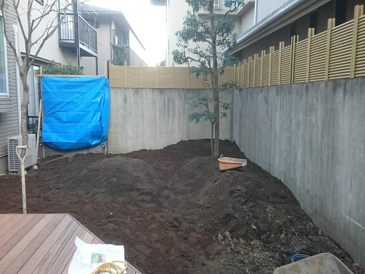 既存シラカシを中心に地形を作っていきます。