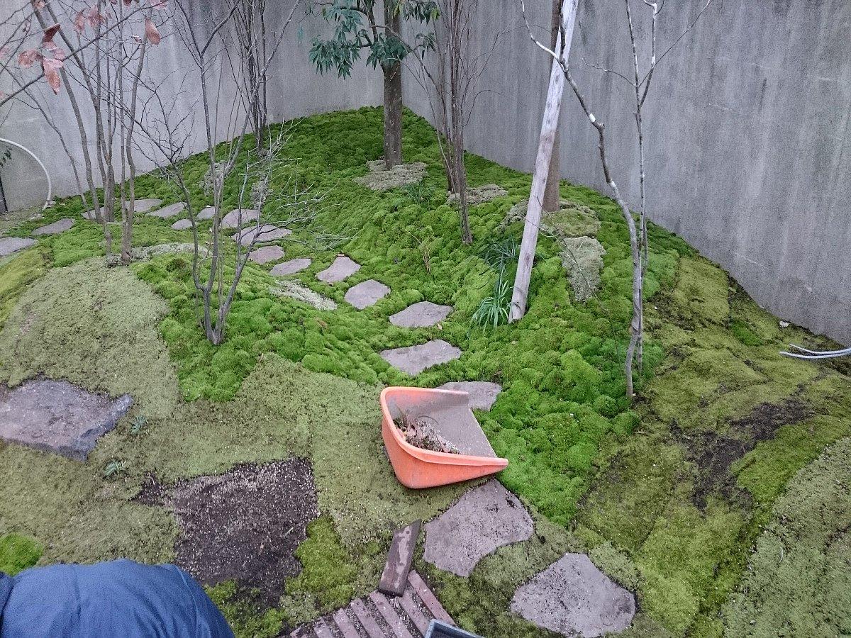 地面部は苔を敷き詰めていきます。