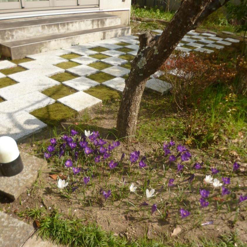 さらに進みますと玄関袖に市松模様が見えてきました。 御影石と苔の合わせ技です。